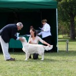 Marybel Miracle Midsummer, Grafenegg Retrievertrophy, Golden Retriever