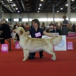 CHEAD - Funky Groove from Strawberry Goldens: EXC. 4. in male junior class (30 ent.)!!! (owner: Barbara Nagy)