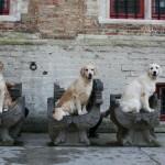 a királylányok, Ginny, Szamó, Tara - Brugge