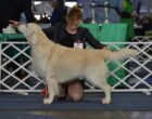 """Caliber from Strawberry Goldens """"COLIN"""""""